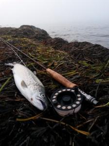 Dagens første fisk